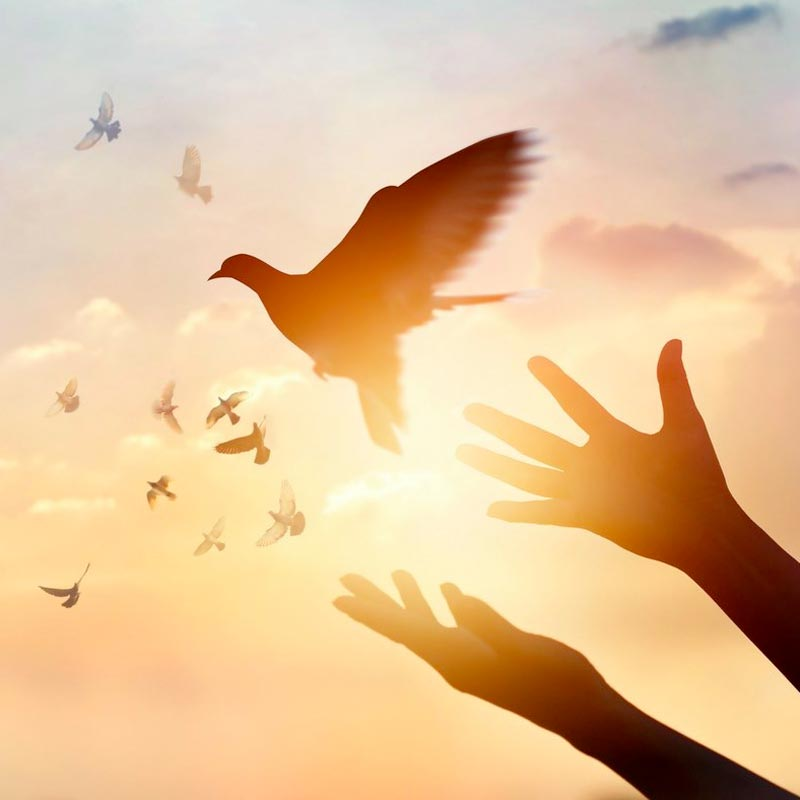 Vimal-hands-birds